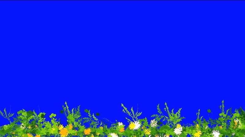 绿屏抠像野花绿草.jpg
