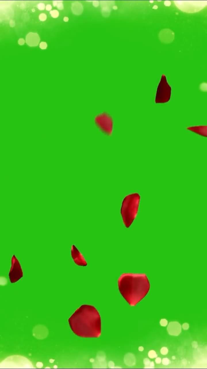 绿屏抠像竖版飘落的花瓣.jpg