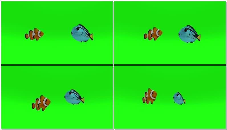 绿屏抠像热带鱼.jpg