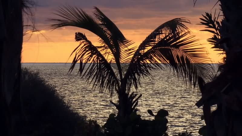 [4K]海风吹动下的椰树背影片头背景