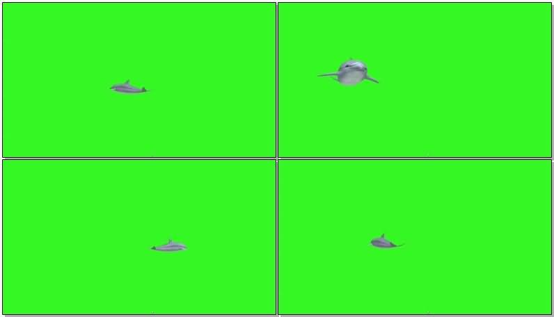绿屏抠像海豚.jpg