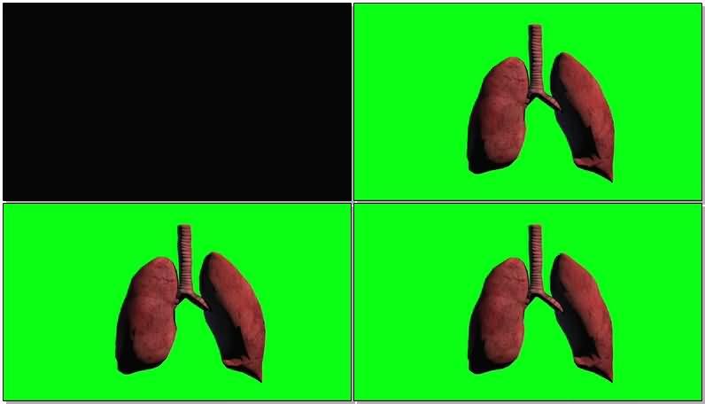 绿屏抠像呼吸的肺.jpg