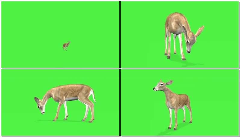 绿屏抠像野鹿.jpg