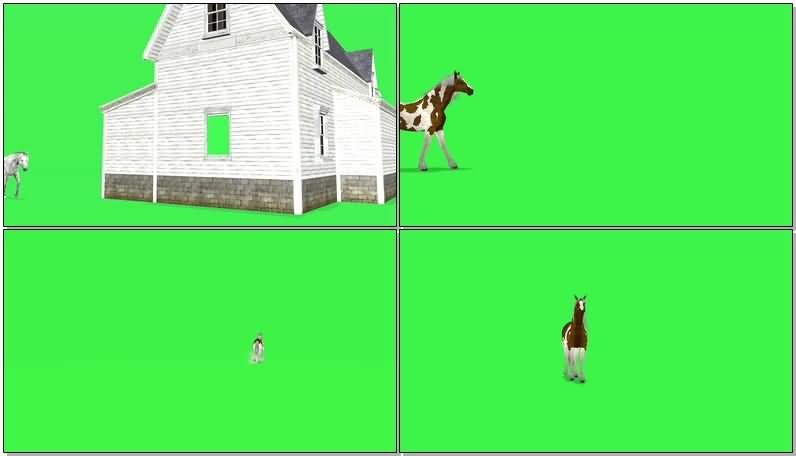 绿屏抠像奔跑的马匹.jpg