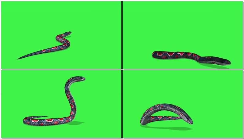 绿屏抠像毒蛇.jpg