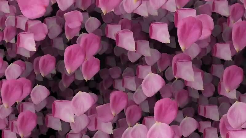 满屏飘落的粉色花瓣.jpg