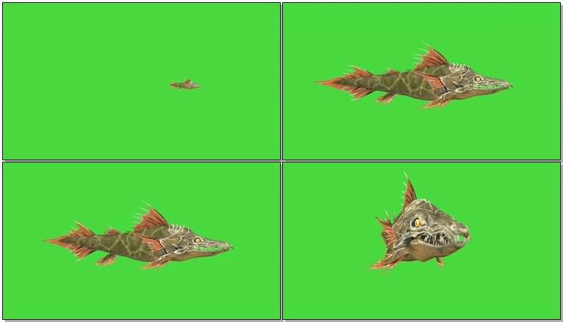 绿屏抠像凶猛的食人鱼.jpg