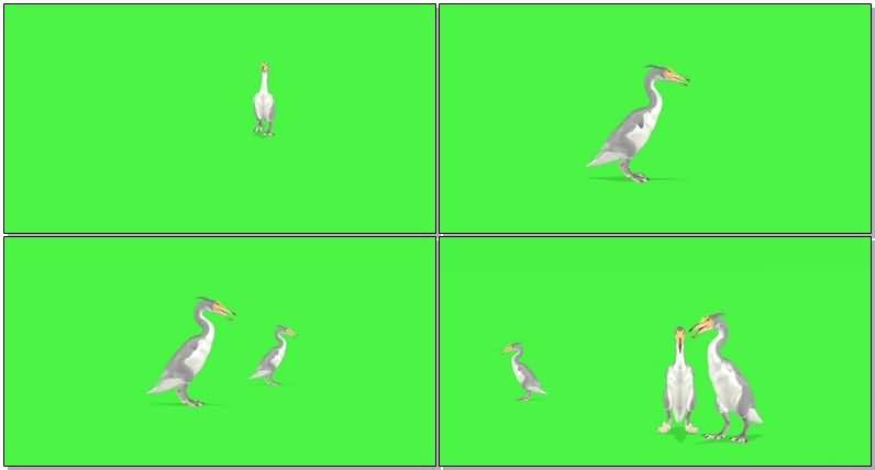绿屏抠像鸭嘴兽.jpg