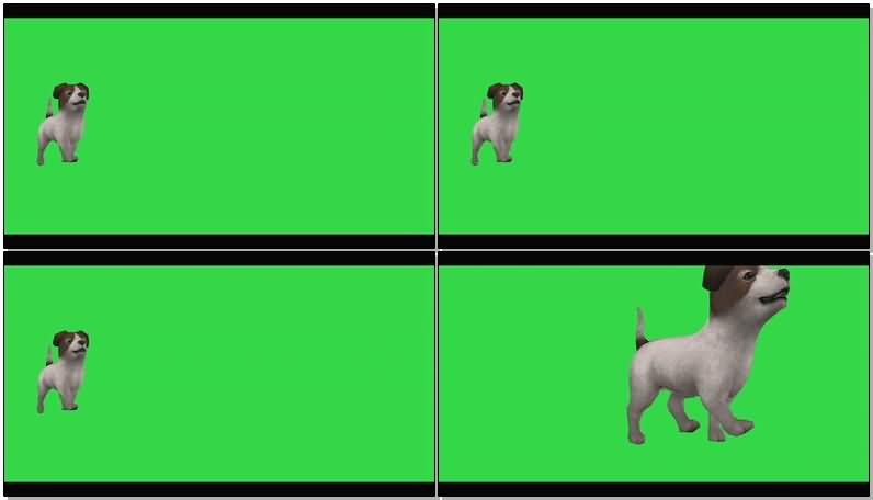 绿屏抠像白色小狗.jpg