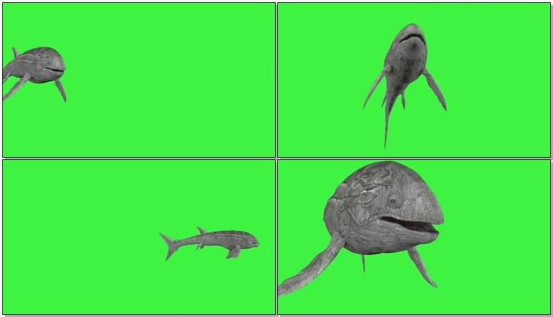绿屏抠像巨大的鲸鱼.jpg