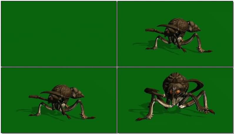绿屏抠像巨型甲壳虫.jpg