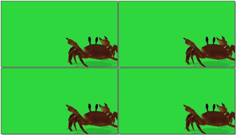 绿屏抠像螃蟹.jpg