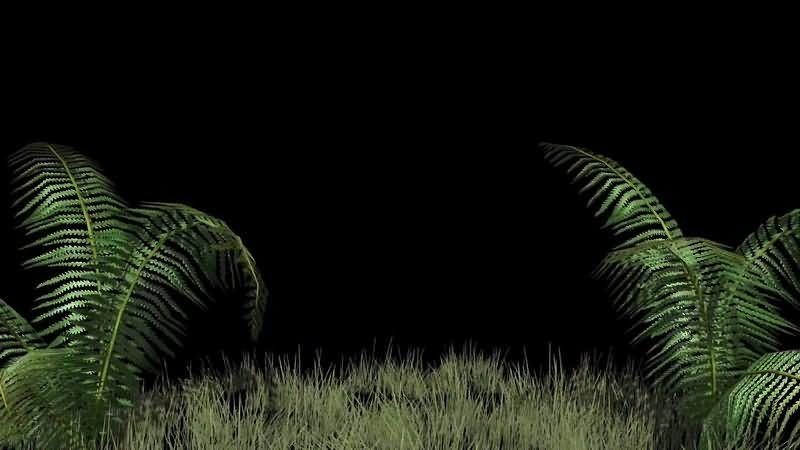 青草地绿叶背景视频素材