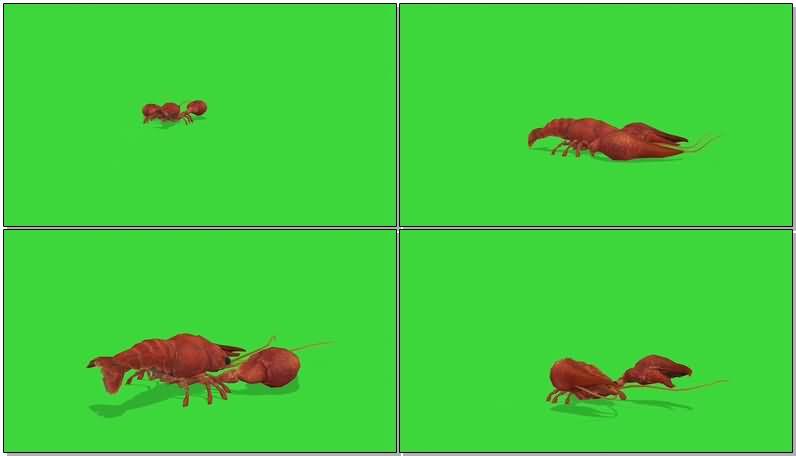 绿屏抠像小龙虾.jpg