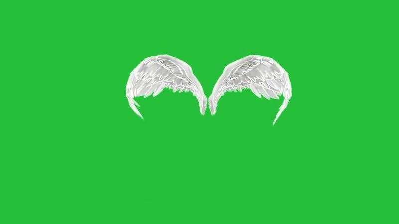 绿屏抠像白色天使翅膀.jpg