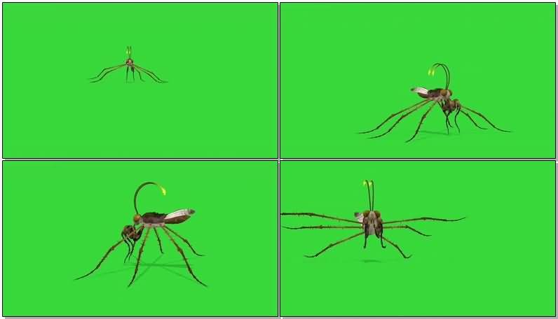 绿屏抠像史前巨型昆虫.jpg