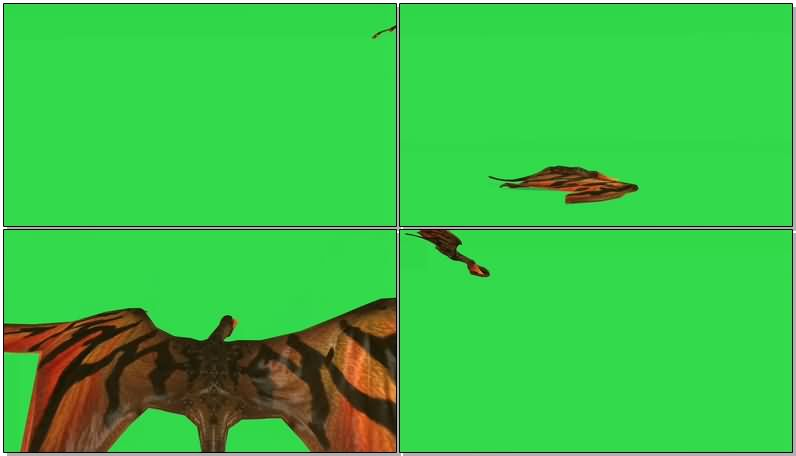 绿屏抠像翼龙视频素材