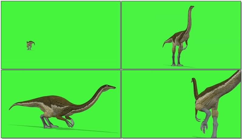 绿屏抠像似鸡龙恐龙.jpg