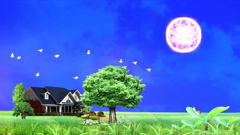 美丽房子花园自然风景视频素材