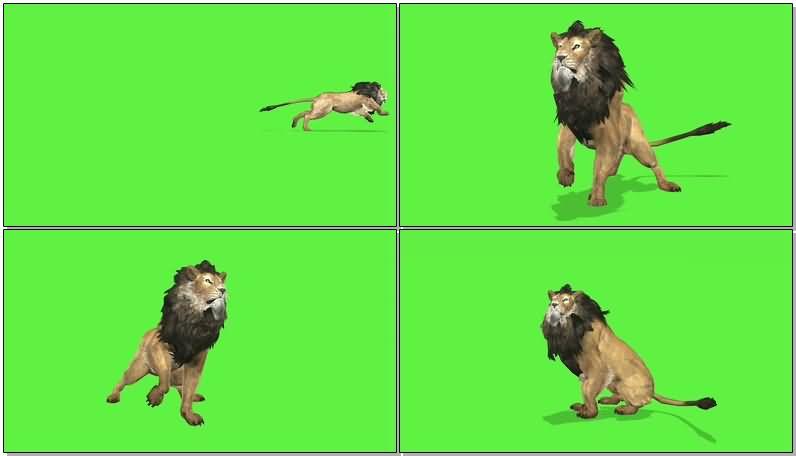 绿屏抠像狮子.jpg