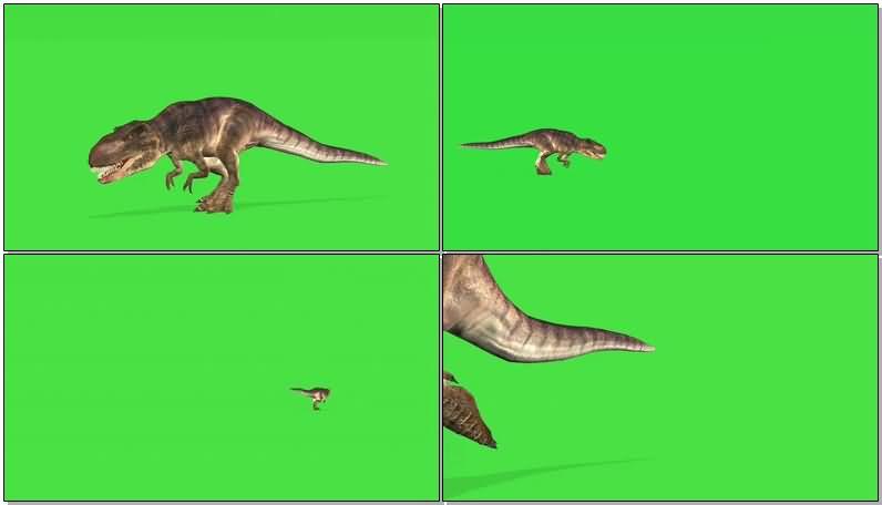 绿屏抠像凶猛的霸王龙视频素材