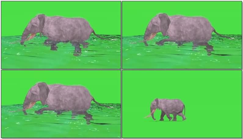 绿屏抠像奔跑游泳的大象.jpg