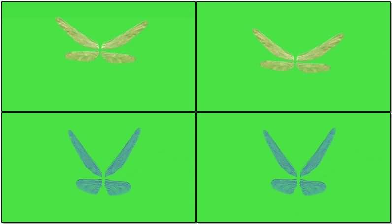绿屏抠像蜻蜓翅膀.jpg