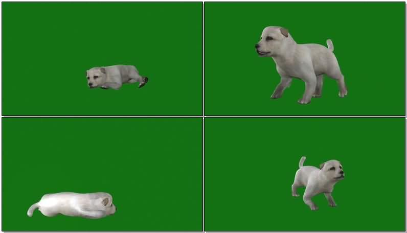 绿屏抠像小狗幼犬.jpg