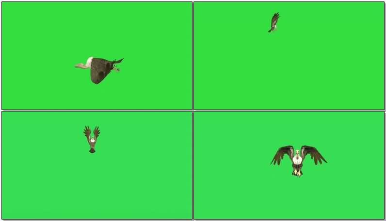 绿屏抠像秃鹰.jpg
