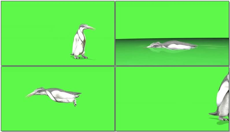 绿屏抠像企鹅.jpg