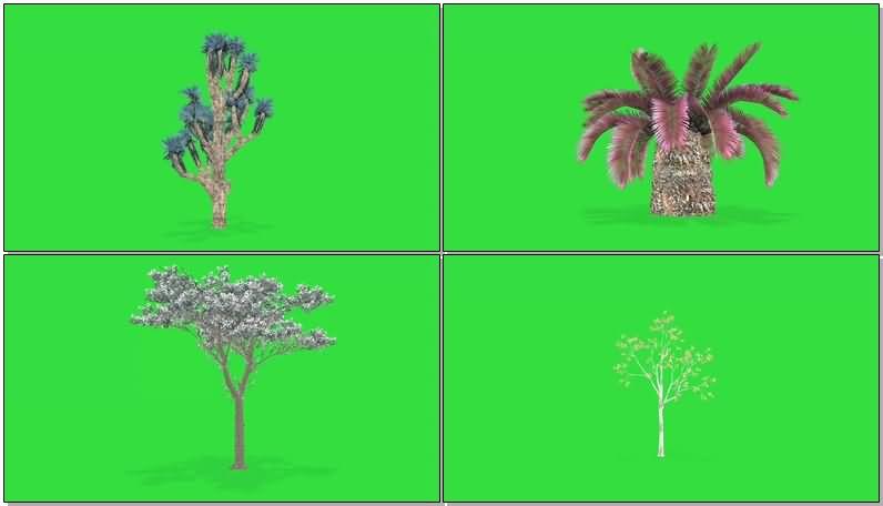 绿屏抠像各种草本植物树木视频素材
