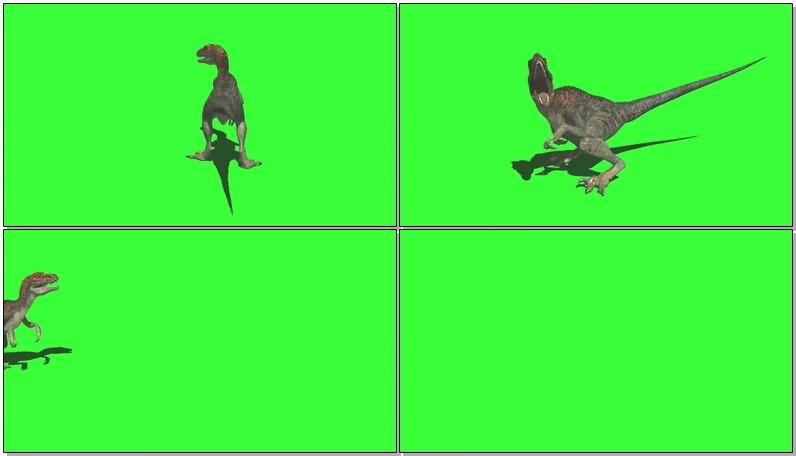 绿屏抠像迅猛龙恐龙视频素材