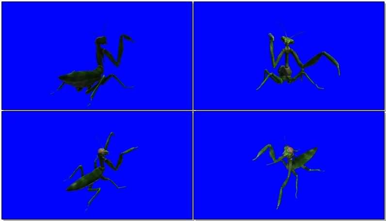 绿屏抠像立体螳螂.jpg