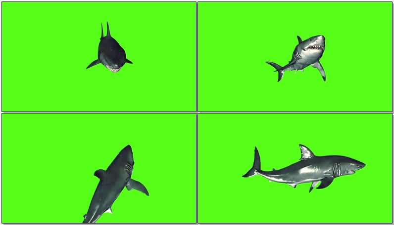 绿屏抠像凶猛的鲨鱼.jpg