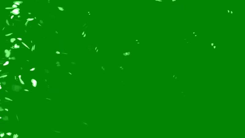 绿屏抠像飘散的心型叶子.jpg