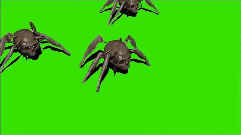 绿屏抠像骷髅头蜘蛛.jpg