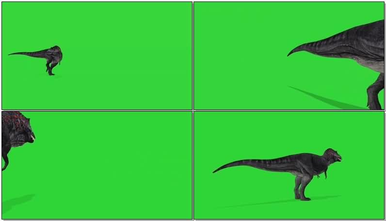 绿屏抠像暴走的霸王龙视频素材