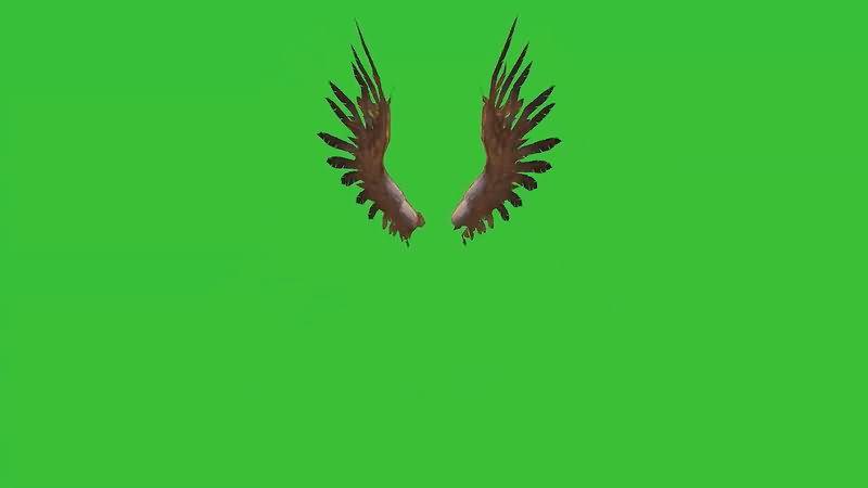 绿屏抠像挥舞的翅膀.jpg