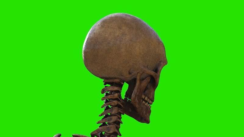 绿屏抠像人体头骨骷髅.jpg