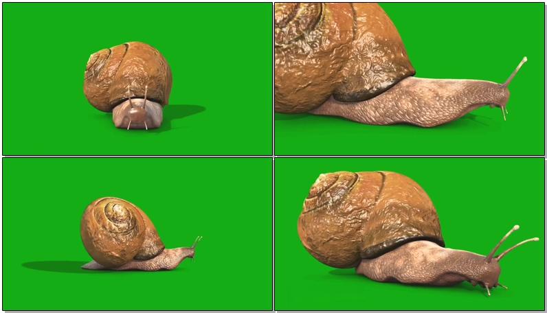 绿屏抠像蜗牛.jpg