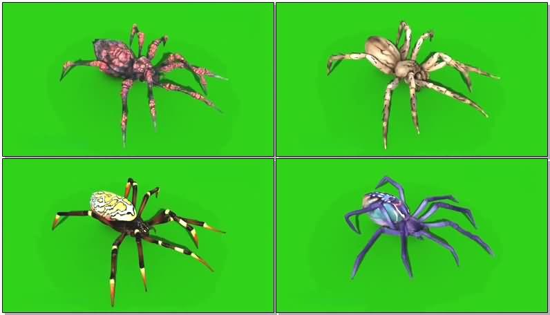 绿屏抠像毒蜘蛛.jpg