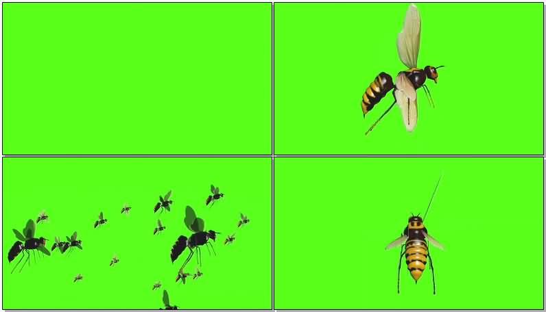 绿屏抠像黄蜂视频素材