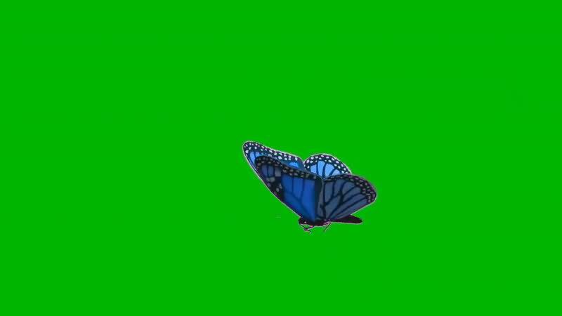 绿屏抠像飞舞的蝴蝶.jpg