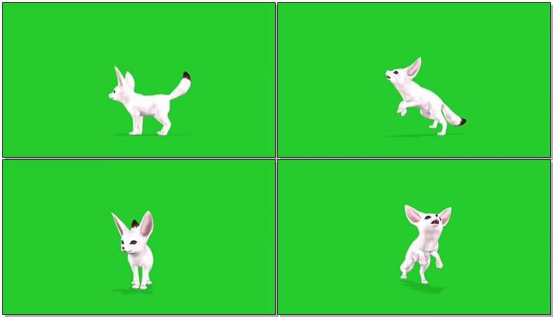绿屏抠像白色雪狐.jpg