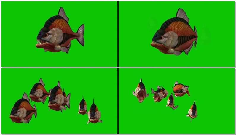 绿屏抠像食人鱼.jpg