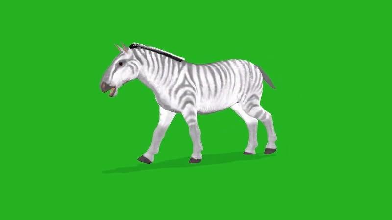 绿屏抠像斑马.jpg