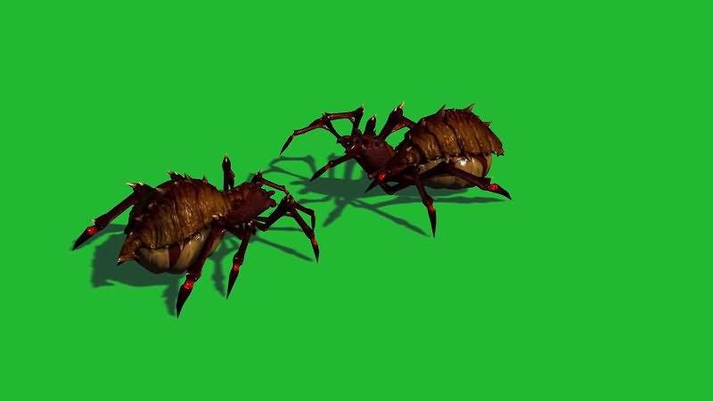 绿屏抠像打架的蜘蛛.jpg
