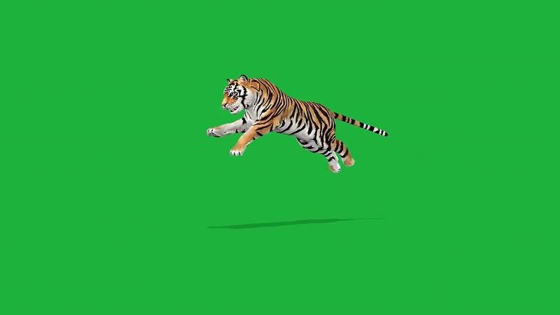 绿屏抠像老虎.jpg
