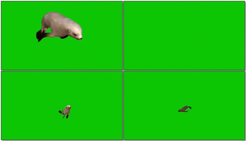 绿屏抠像海豹.jpg
