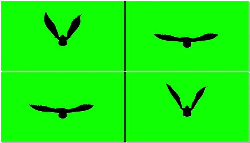 绿屏抠像飞行的鸽子剪影.jpg